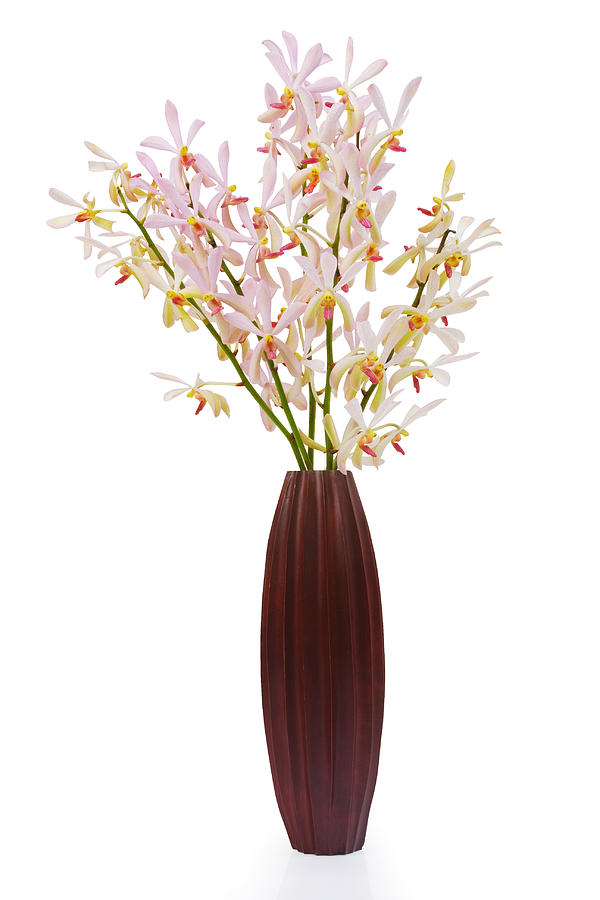 Pink Orchid In Wood Vase Photograph