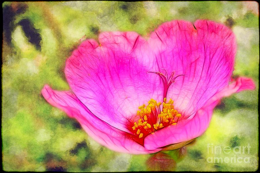 Pink Portulaca Photograph