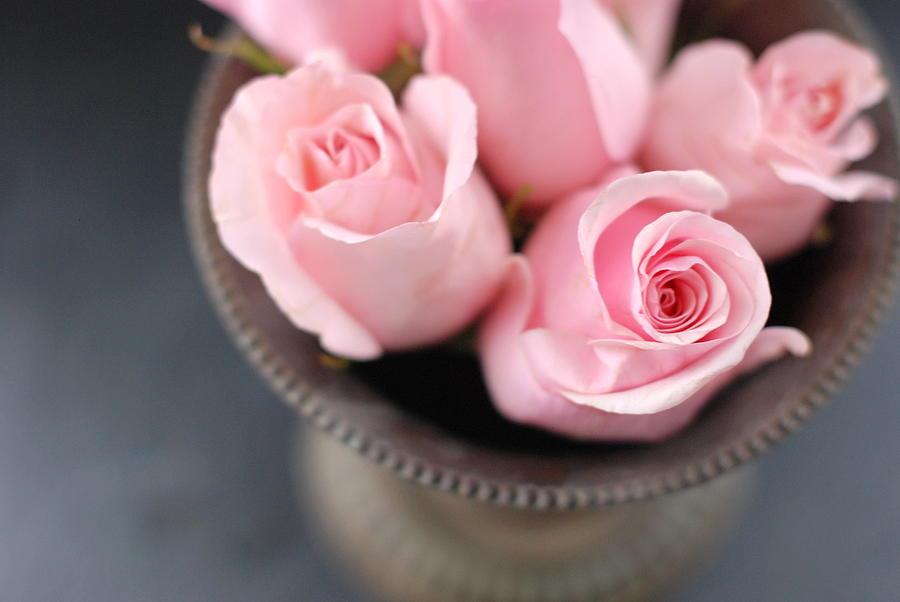 Horizontal Photograph - Pink Roses by Shawna Lemay