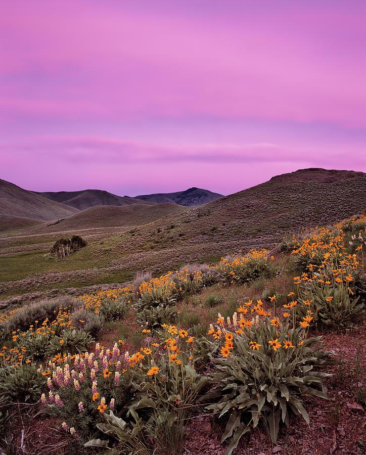 Pioneer Mountain Spring Photograph
