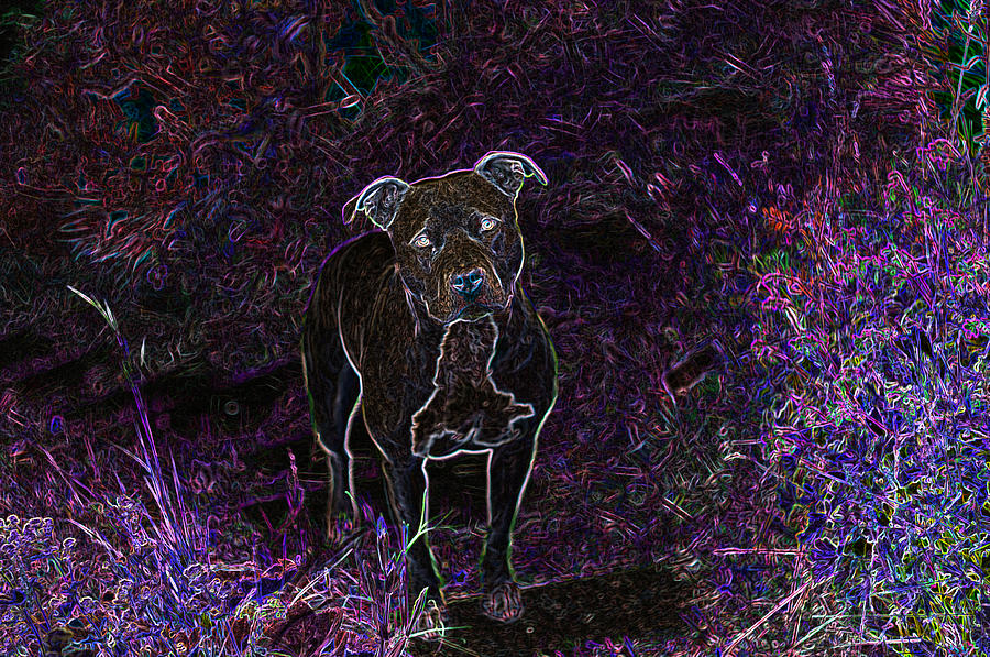 Pitbull Photograph - Pitty In Purple  by Travis Crockart