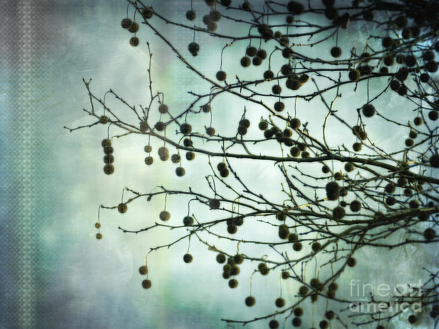 Plane Beauty - London Plane Tree Digital Art  - Plane Beauty - London Plane Tree Fine Art Print