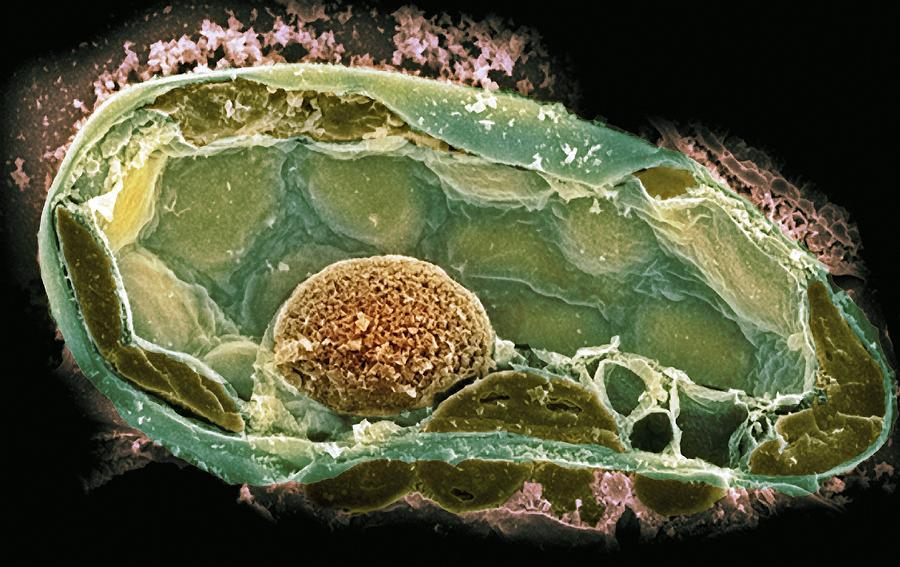 Cell Diagram Riley Allen