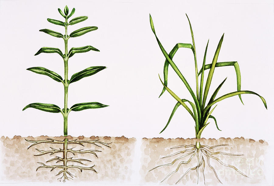 Plant Comparison Photograph  - Plant Comparison Fine Art Print