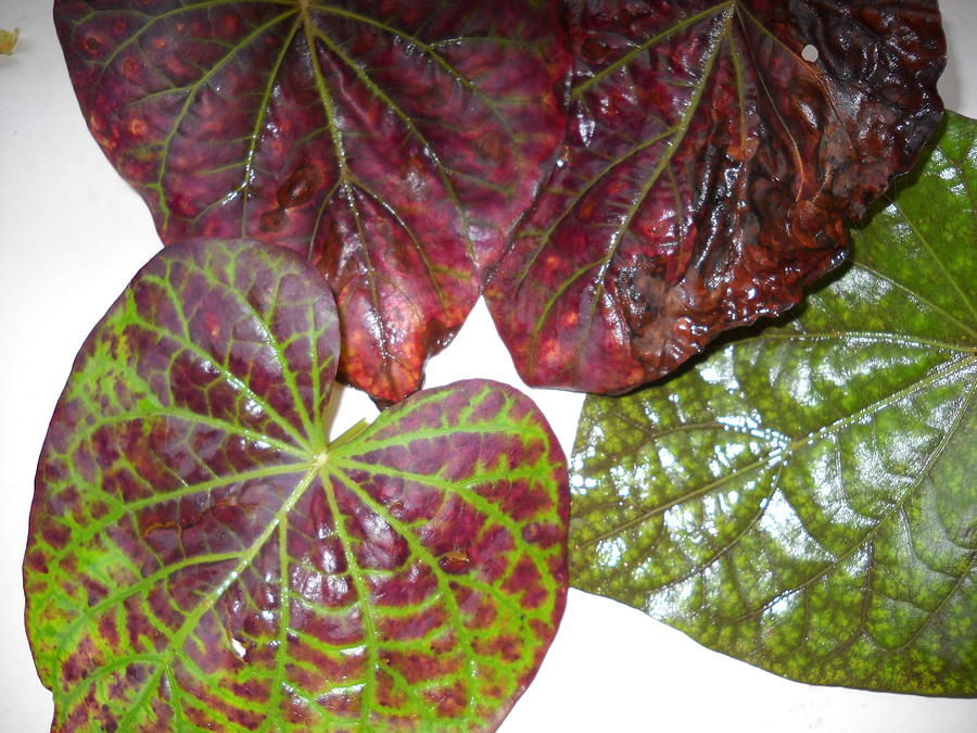 Tropical Plant Leaves Tropical Plants