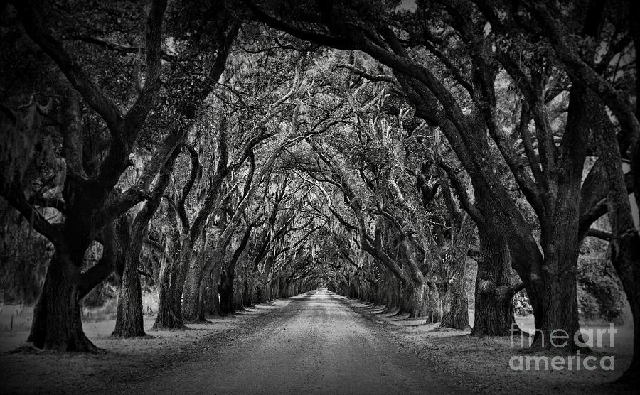 Plantation Oak Alley Photograph