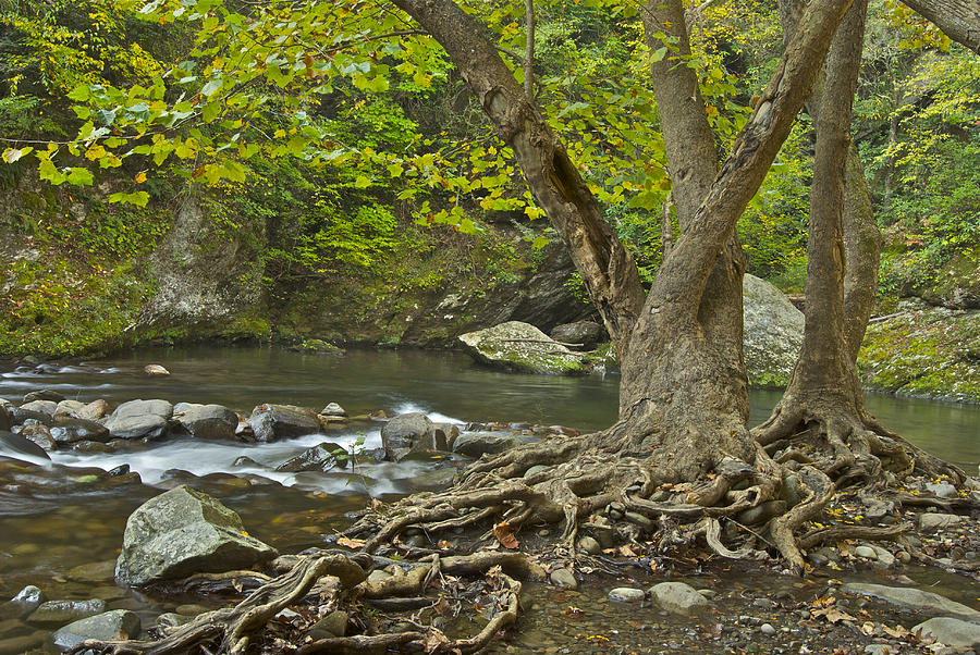 Tennessee Photograph - Planted By The Rivers Of Water by Michael Peychich