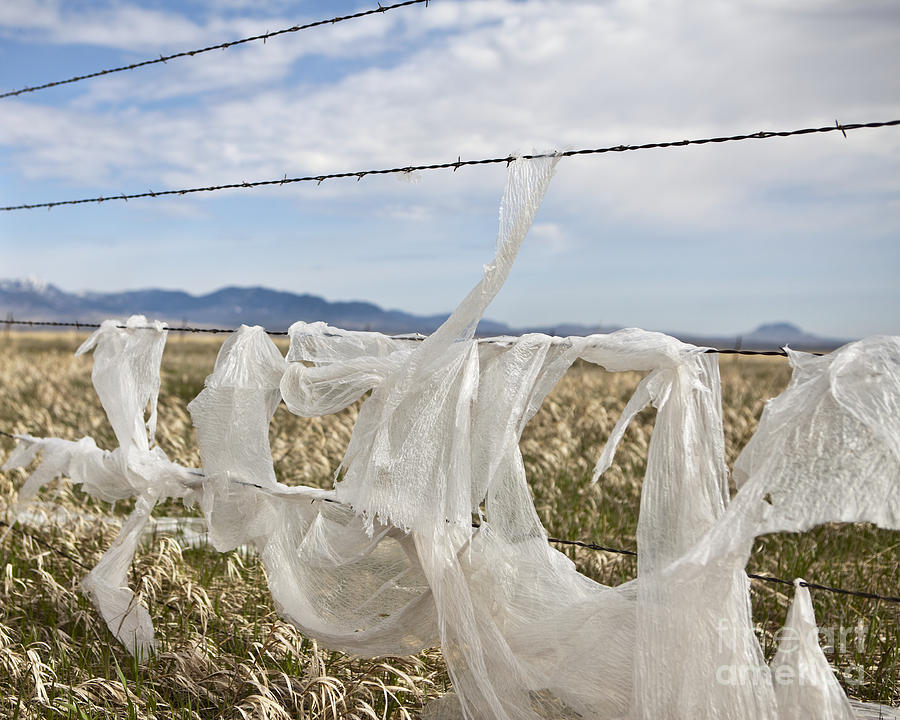 Plastic Garbage Bag On A Wire Fence Photograph  - Plastic Garbage Bag On A Wire Fence Fine Art Print