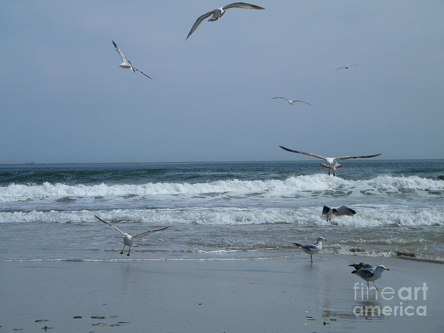 Playful Gulls Photograph  - Playful Gulls Fine Art Print