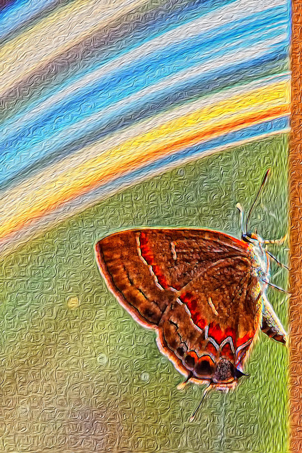 Playroom Butterfly Photograph  - Playroom Butterfly Fine Art Print