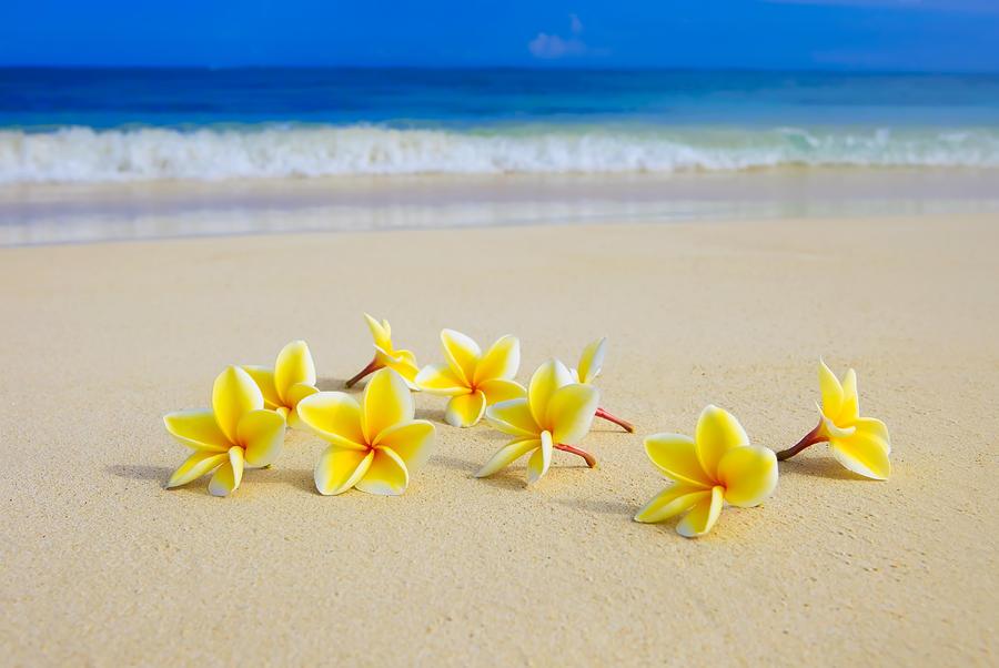 Plumeria Beach Ii Frangipani Sandy Tropical Flower