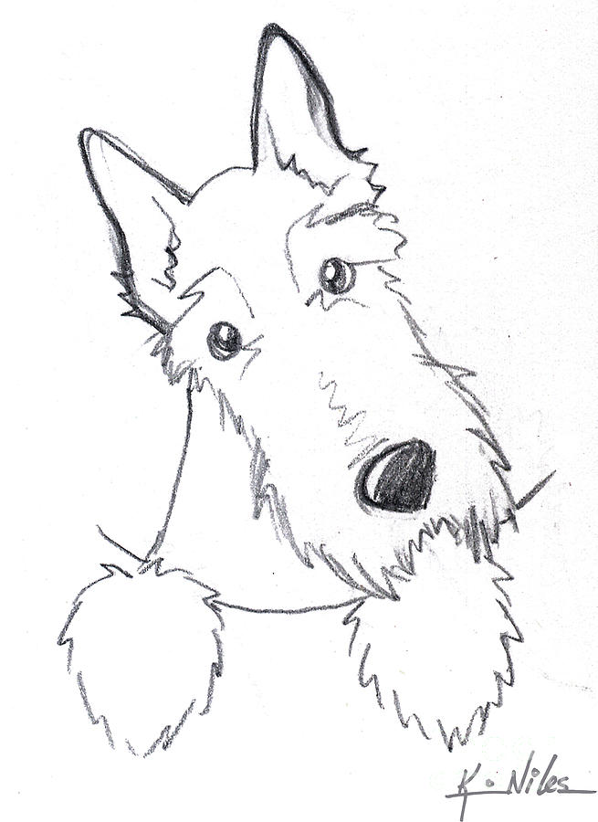 Pocket Scottie Sketch Drawing  - Pocket Scottie Sketch Fine Art Print