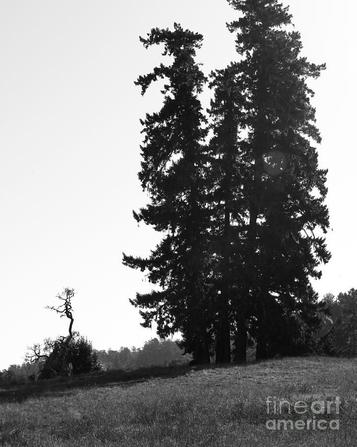 Point Reyes California Landscape . 7d9749 . Black And White Photograph