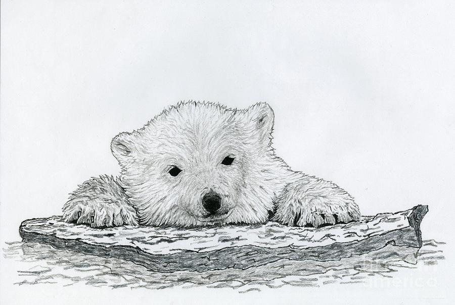 Cute polar bear drawings - photo#20