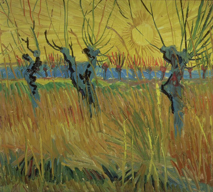Pollarded Willows And Setting Sun Painting