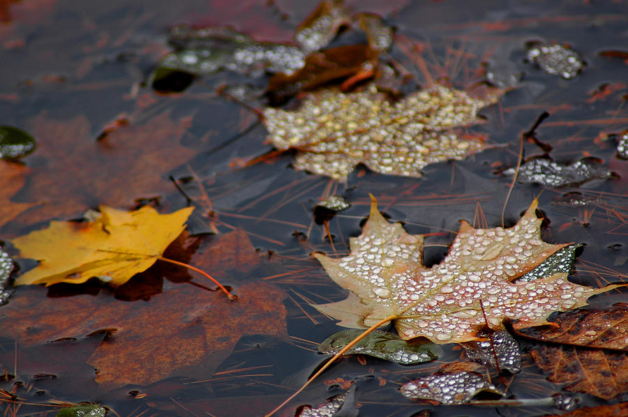 Pond Leaf Dew Drops Photograph