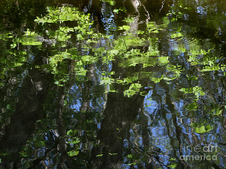 Pond Reflection 1 Photograph  - Pond Reflection 1 Fine Art Print