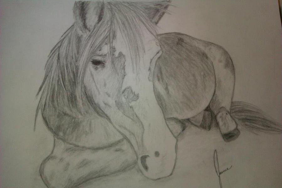 Pony Drawing  - Pony Fine Art Print