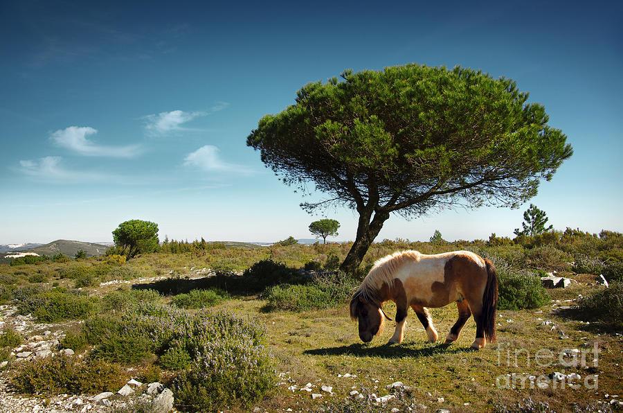 Pony Pasturing Photograph