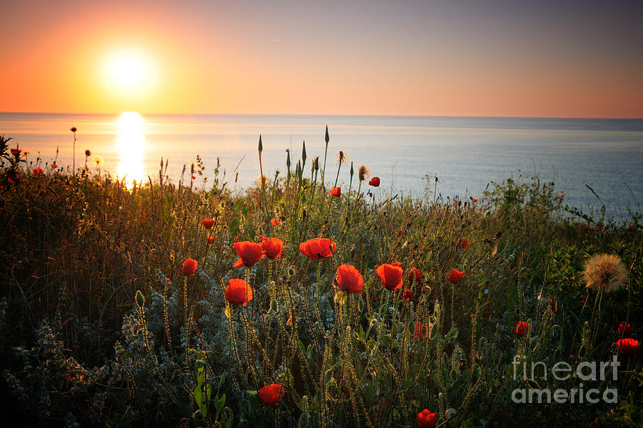 Poppies In The Sunrise Photograph