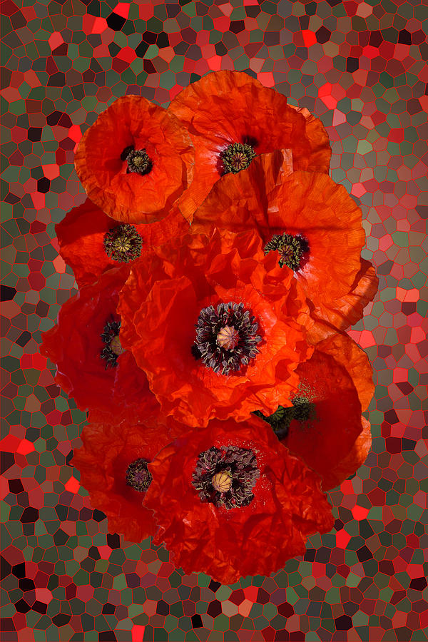 Poppies Photograph