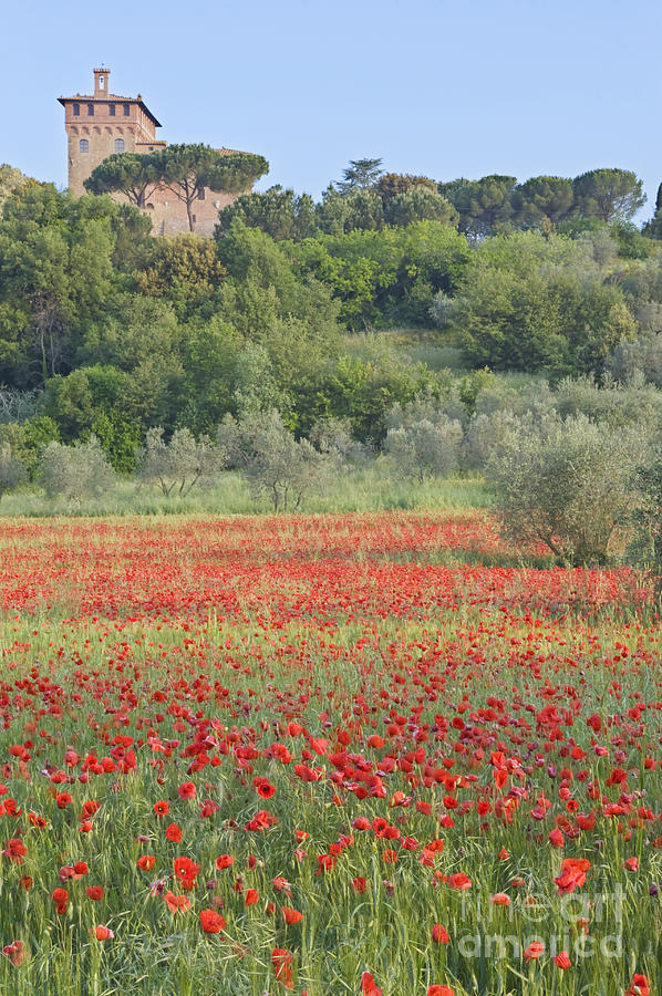 Beautiful Photograph - Poppy Field by Rob Tilley