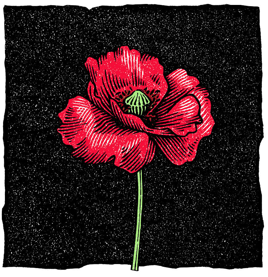 Poppy Flower, Woodcut Photograph