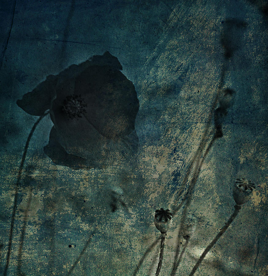 Poppy Smudge Photograph  - Poppy Smudge Fine Art Print