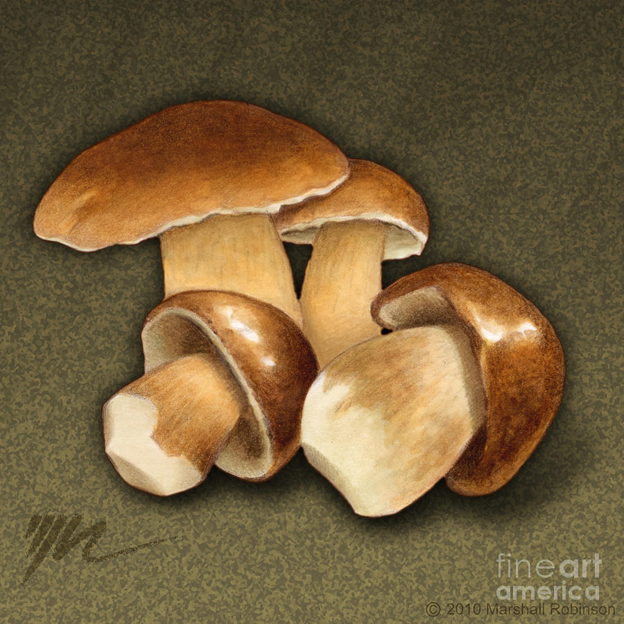 Porcini Mushrooms Painting  - Porcini Mushrooms Fine Art Print