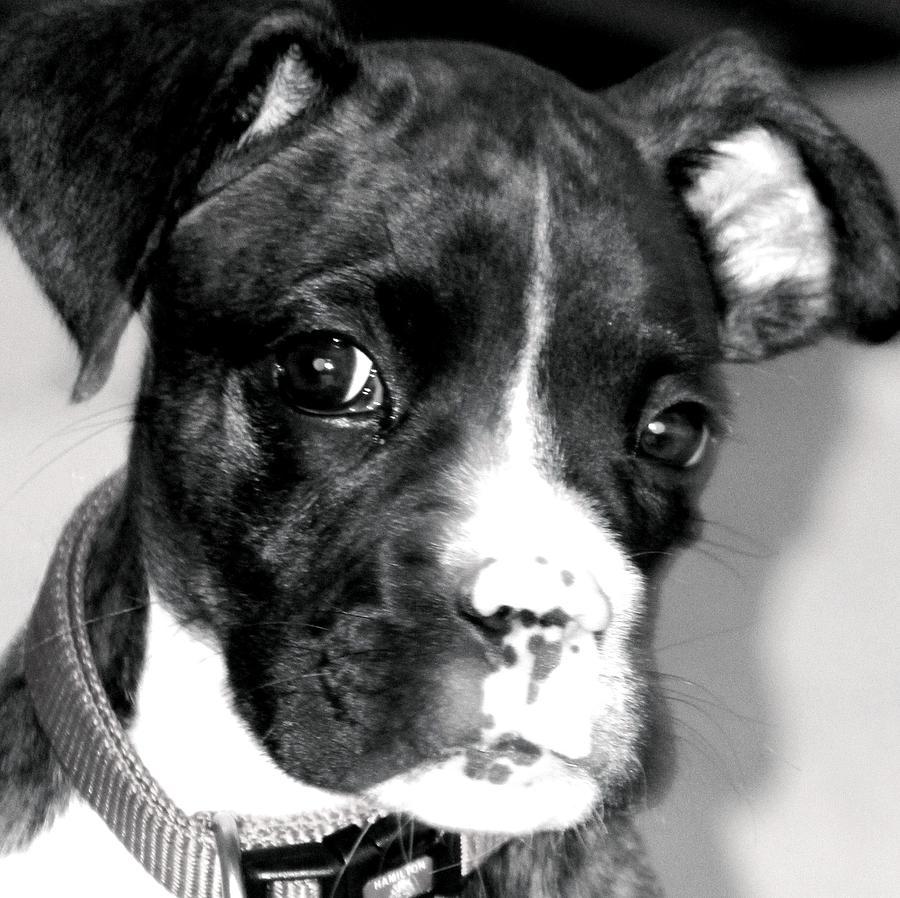 Photographs Photograph - Porter Puppy by Laura  Grisham
