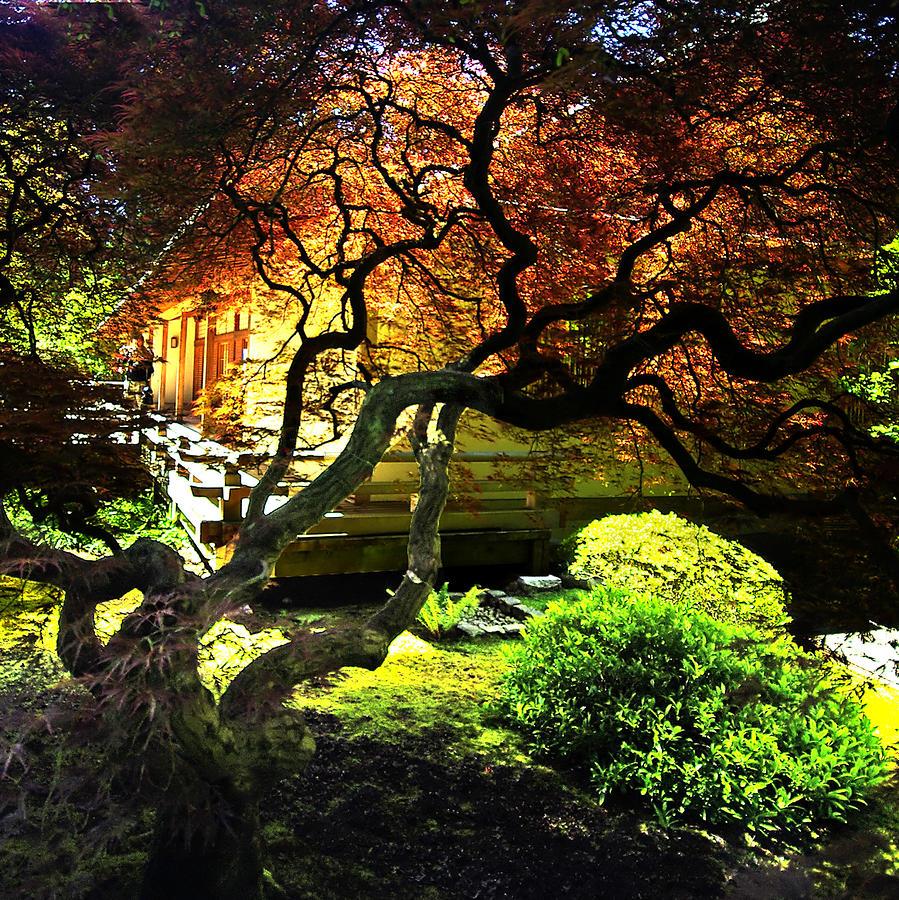 Portland japanese garden 2 photograph