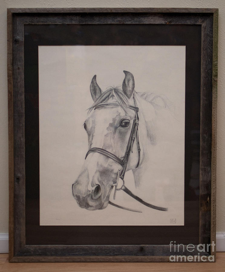 Portrait Of A Horse Drawing