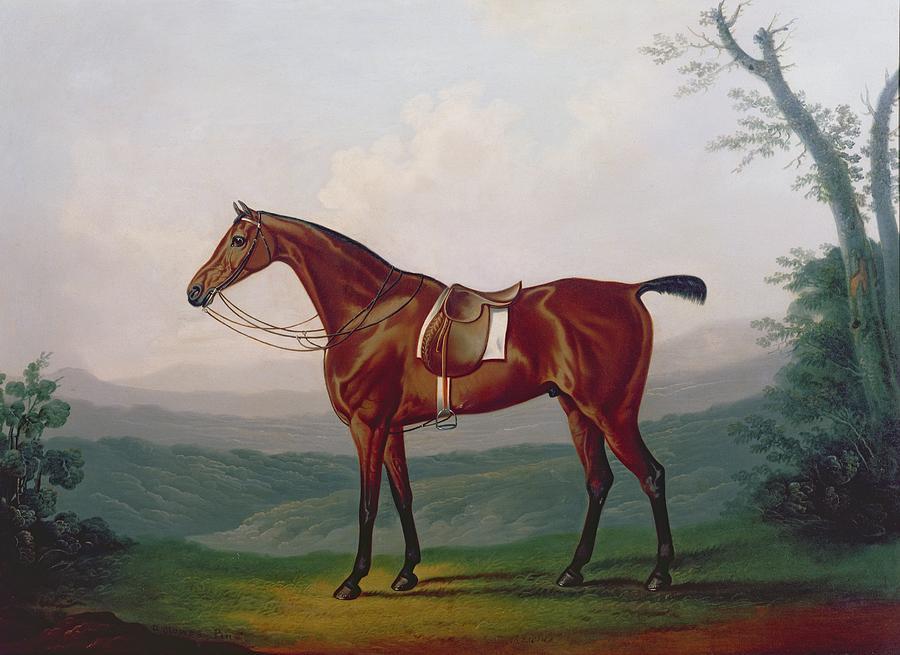 Portrait Of A Race Horse Painting