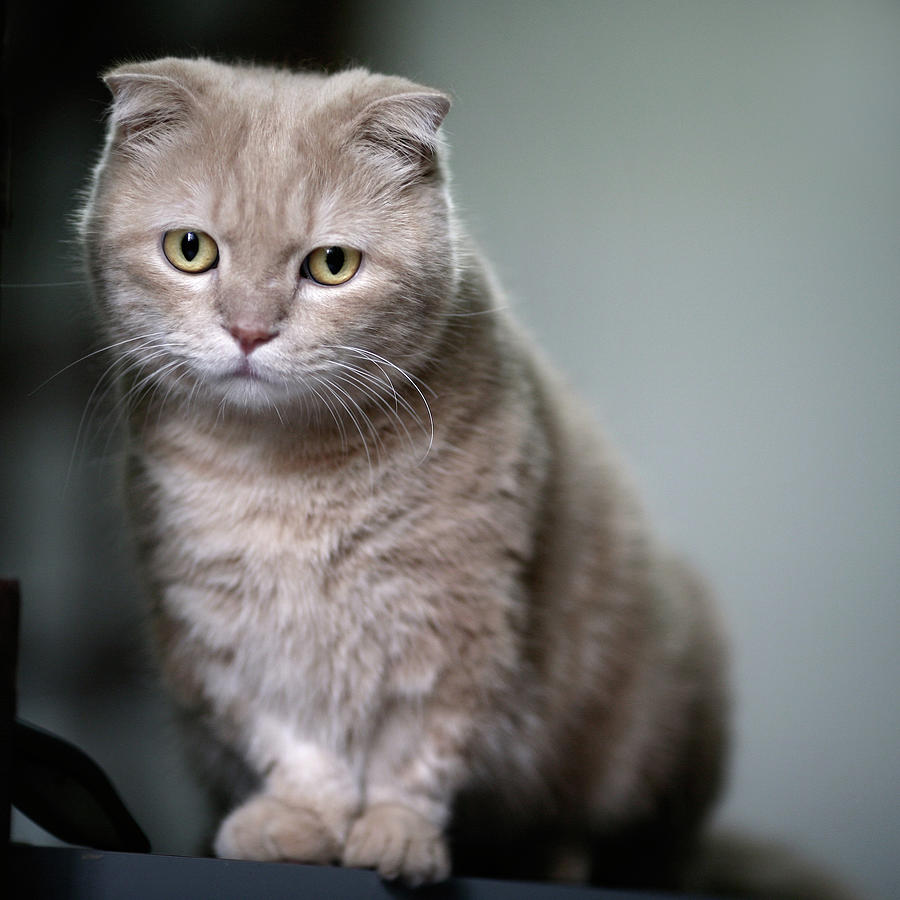 Square Photograph - Portrait Of Cat by LeoCH Studio