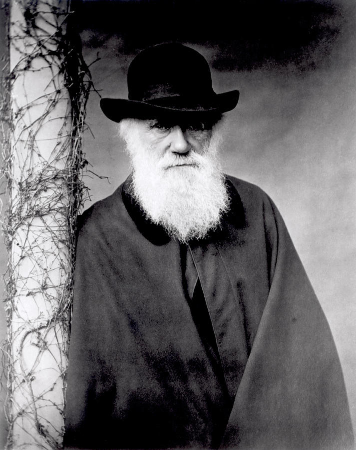 Portrait Of Charles Darwin Photograph