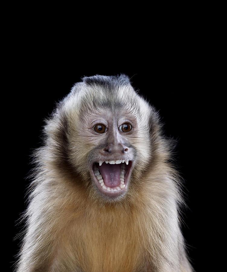 screaming+monkey
