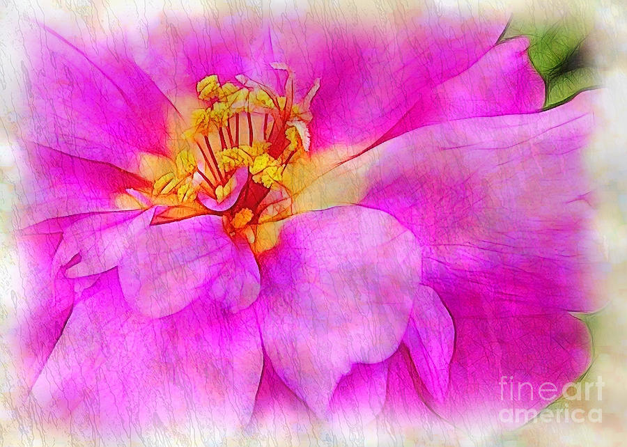 Portulaca Photograph - Portulaca With Texture by Judi Bagwell