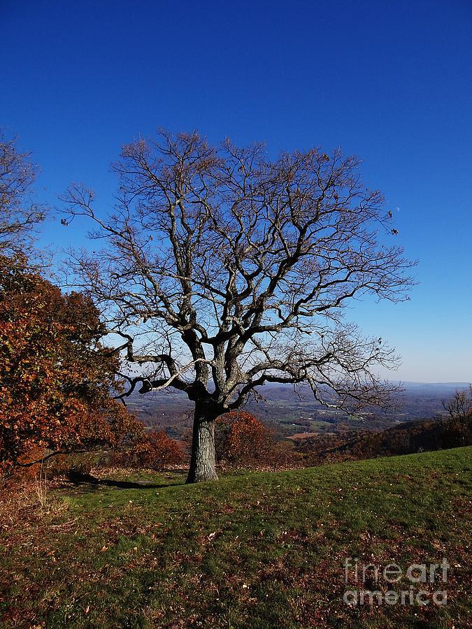 Blue Ridge Photograph - Posing  by Steven Lebron Langston