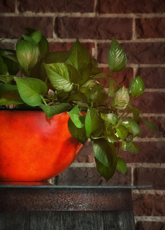 Pot Of Greens Photograph