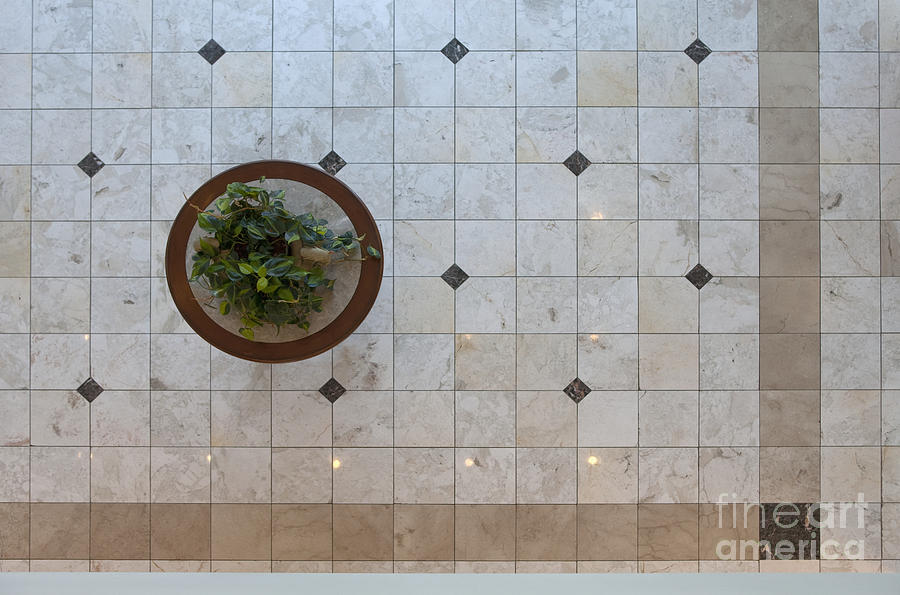 Potted Plant In Foyer Floor From Above Photograph  - Potted Plant In Foyer Floor From Above Fine Art Print