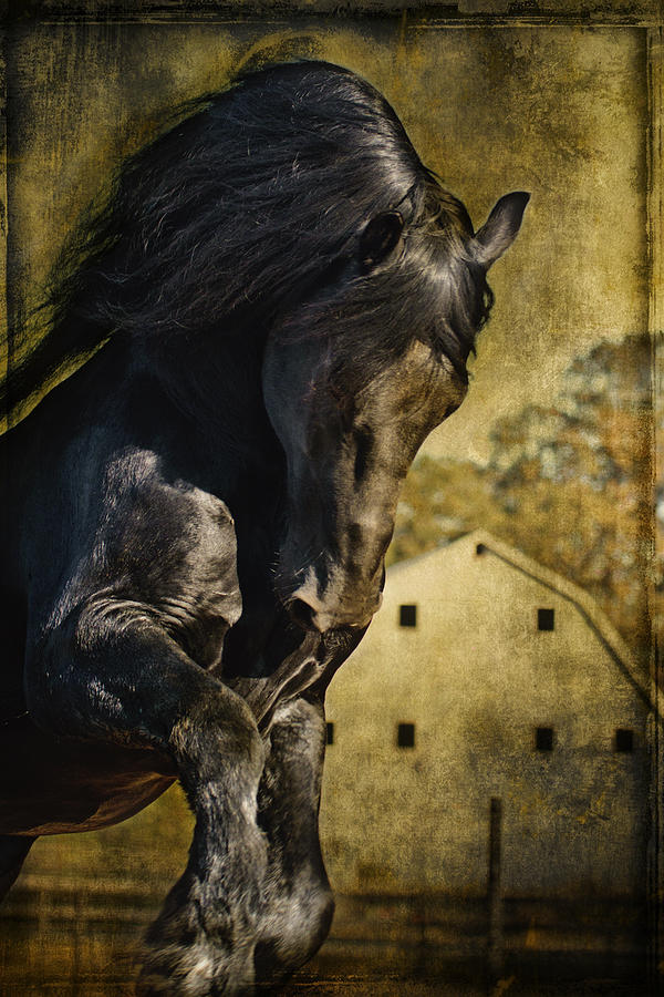 Power House Horse D1496 Photograph - Power House Horse D1496 by Wes and Dotty Weber