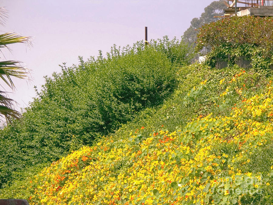pr 30 - Yellow Hillside Photograph  - pr 30 - Yellow Hillside Fine Art Print