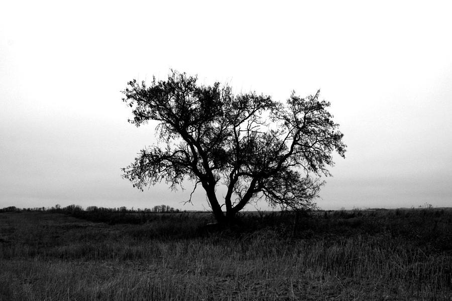Elm Photograph - Prairie Dog by Jerry Cordeiro