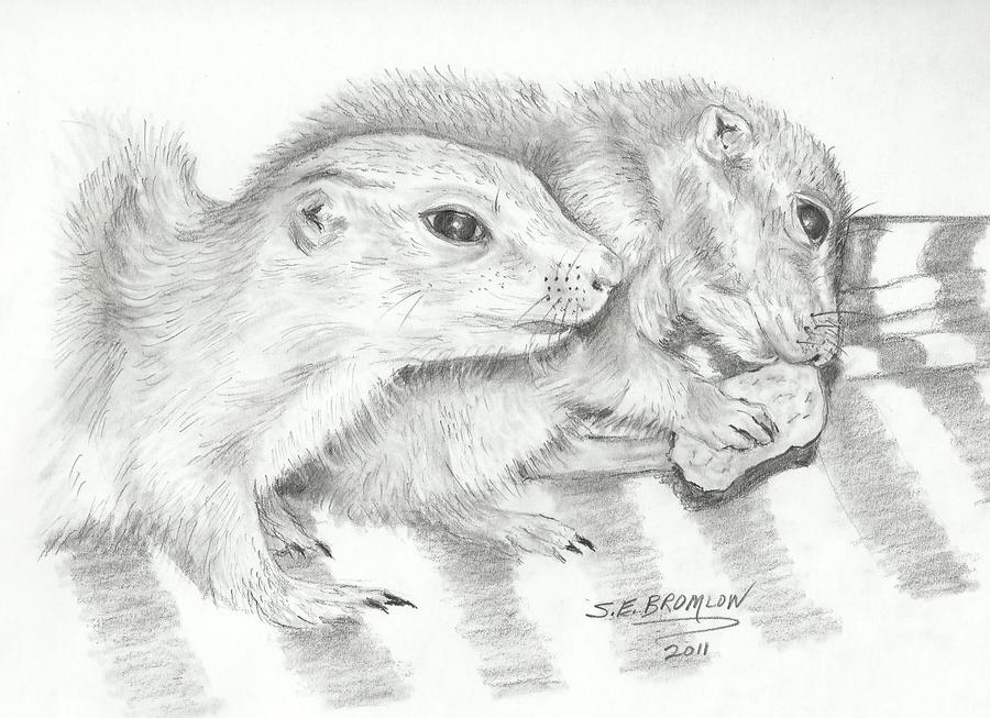 Prairie Dogs Drawing