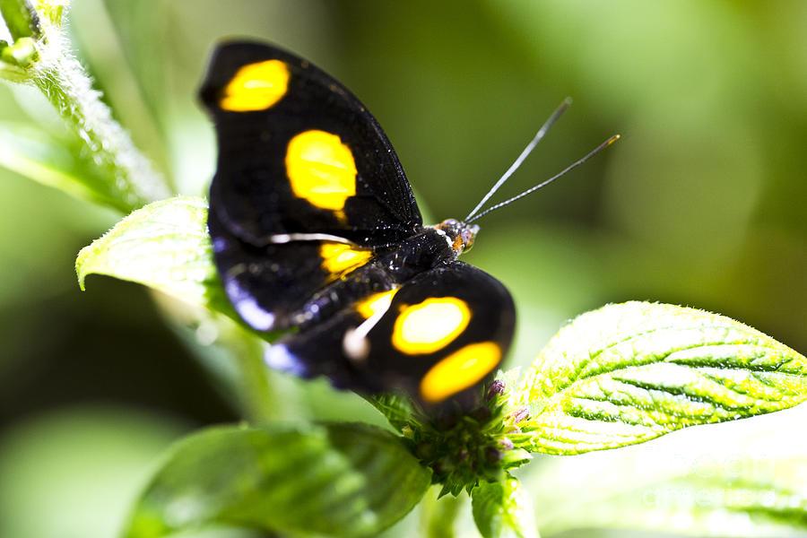 Butterfly Photograph - Precious by Leslie Leda