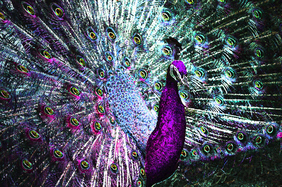 Purple peacock paintings