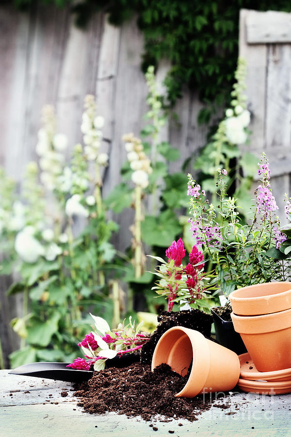 Preparing Flower Pots Photograph  - Preparing Flower Pots Fine Art Print