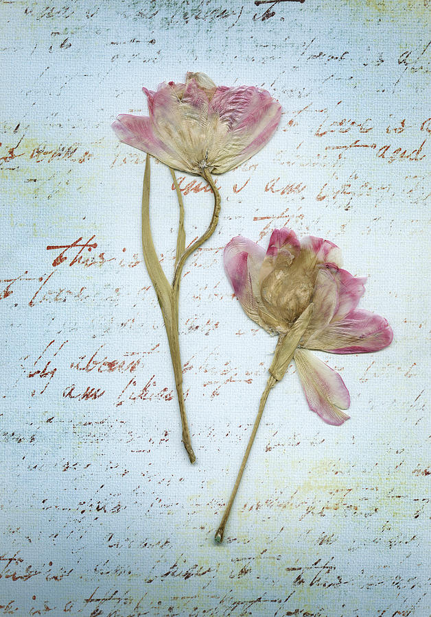pressed flowers | Pressed and dried flowers | Pinterest