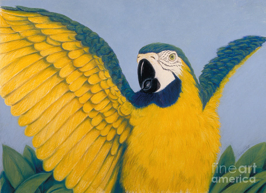 Parrot Pastel - Pretty Bird by Audrey Peaty