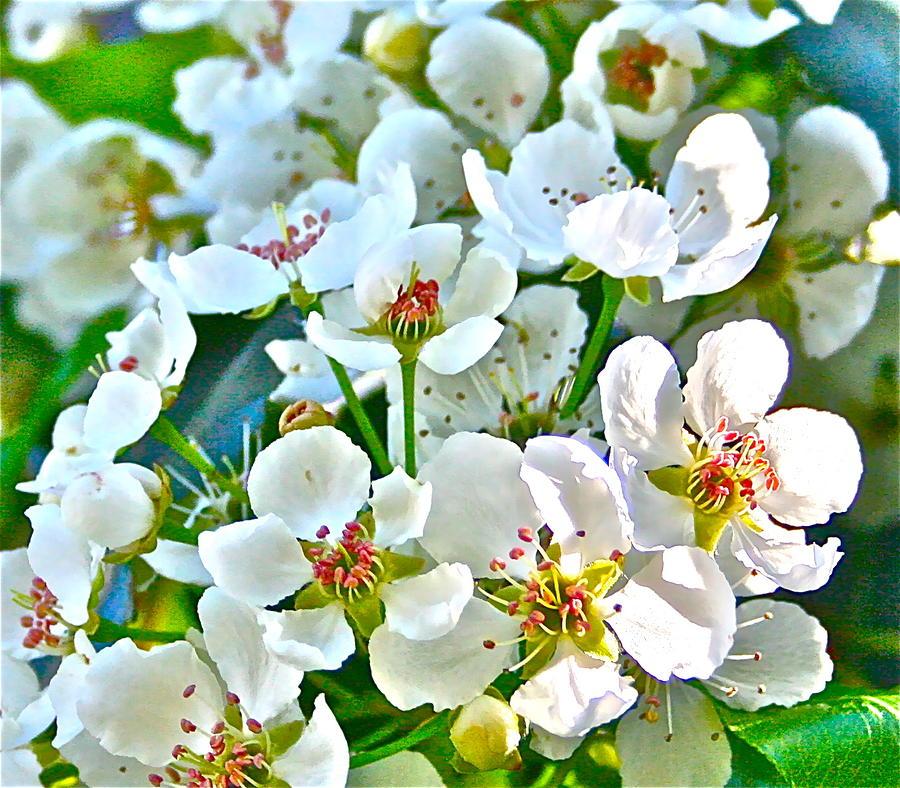 Pretty In White Photograph